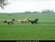 Galopade de Beauca, Peppy et Fedayin