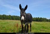 Nectar... et ses grandes oreilles