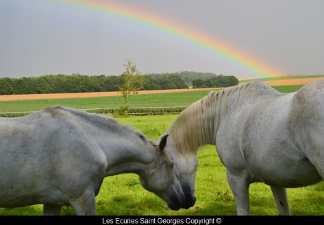 Pandore et Lolita sous un arc en ciel