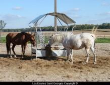 Chevaux au paddock (Aulieu et Lolita)