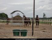 Chevaux au paddock (Alicour, Ty-breizh et Roi)